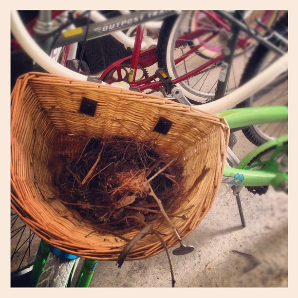 Bike Basket Bird Nest