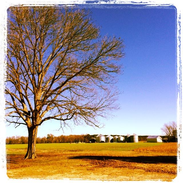 SC Farm