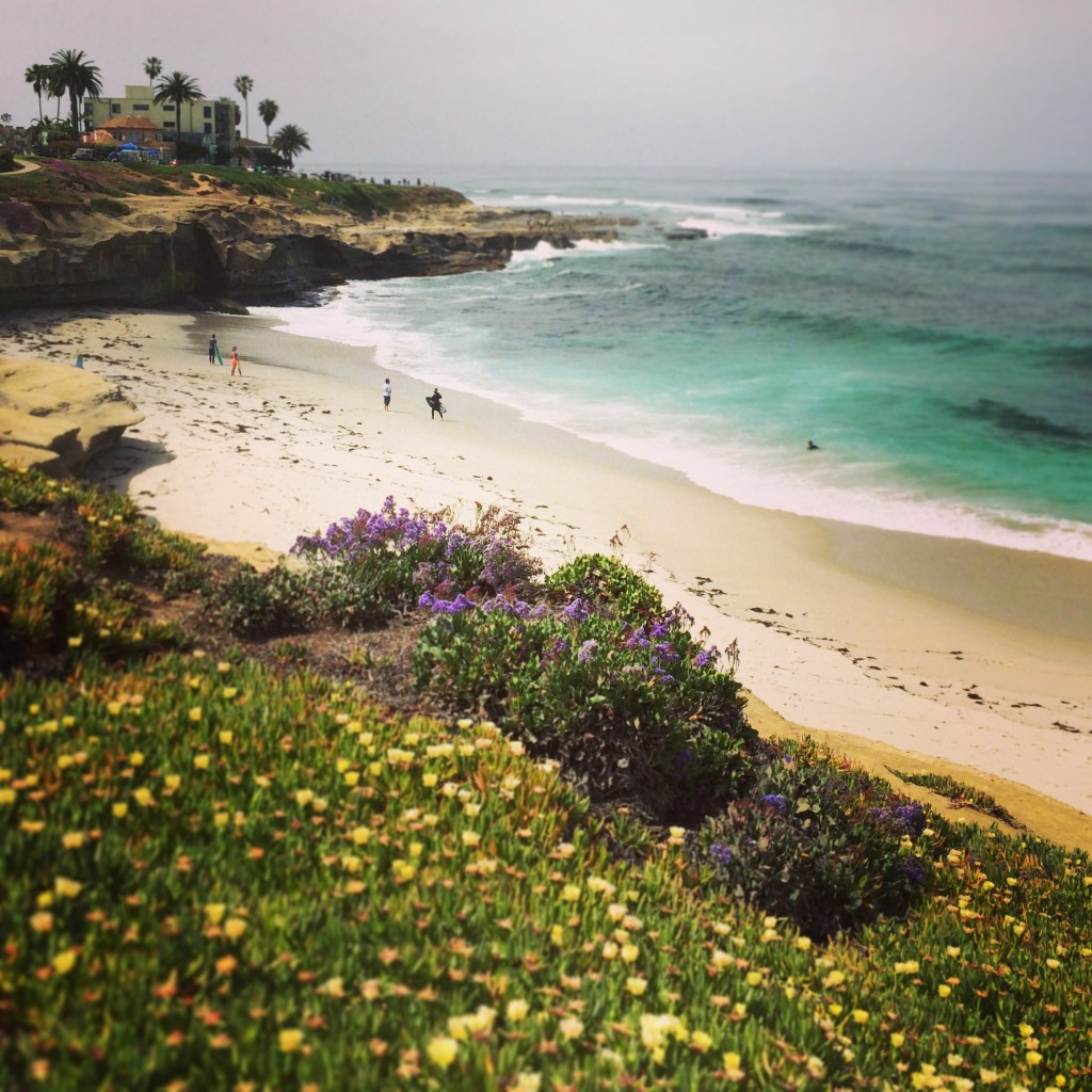 Scenic beauty in La Jolla, California