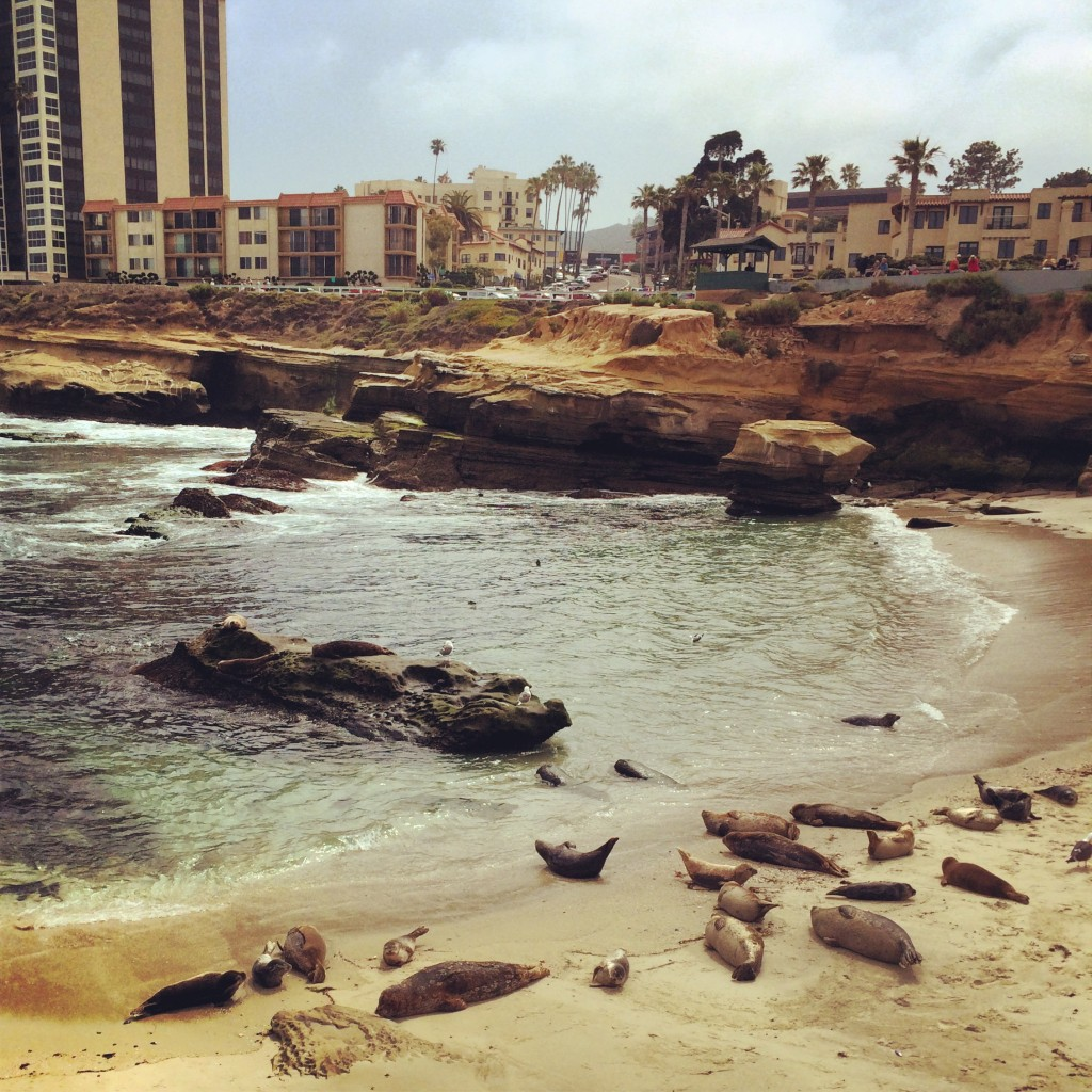 Seals at La Jolla Cove, California