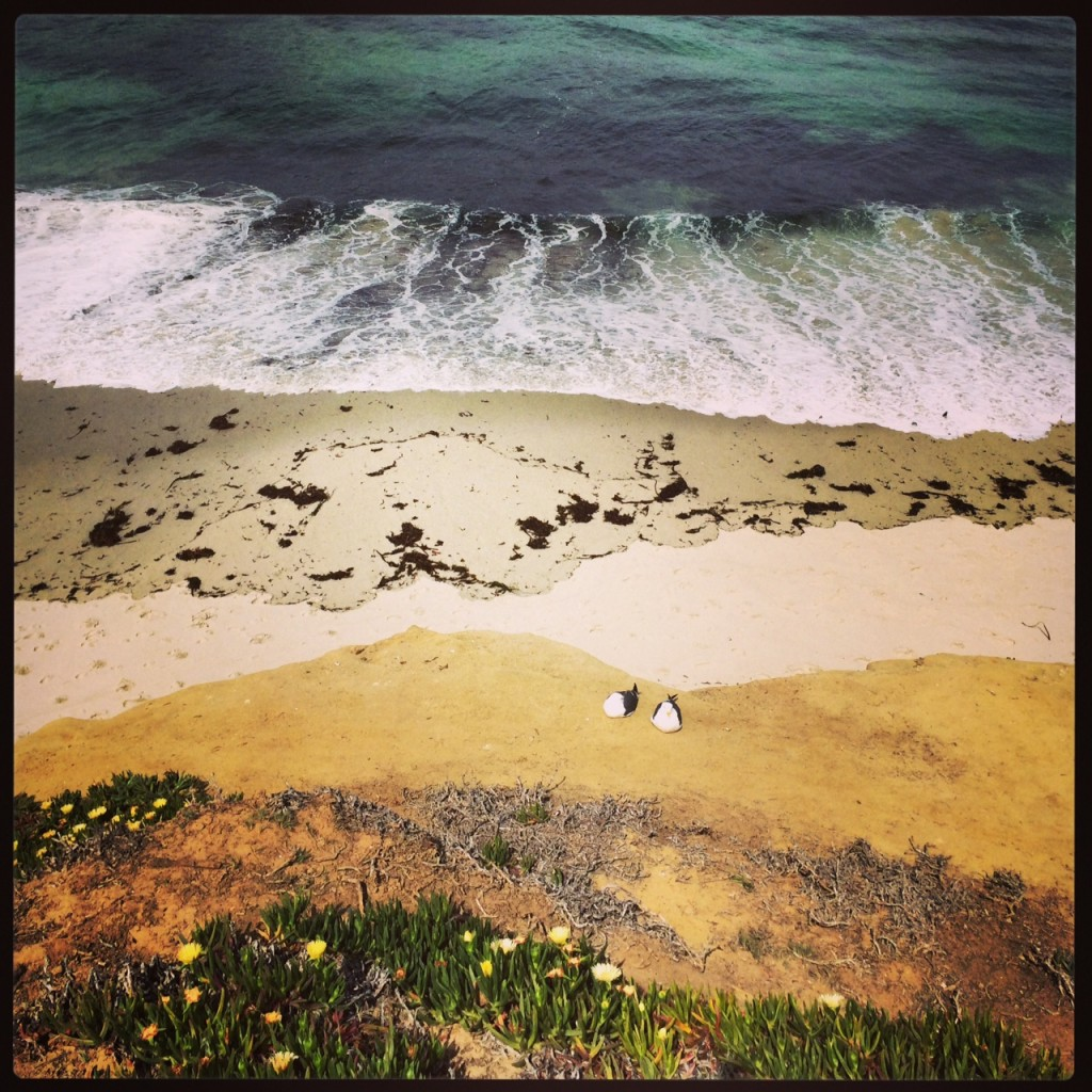 The beautiful coastal elements of La Jolla, California create a multi-layered, natural piece of art. Check the two nesting birds.