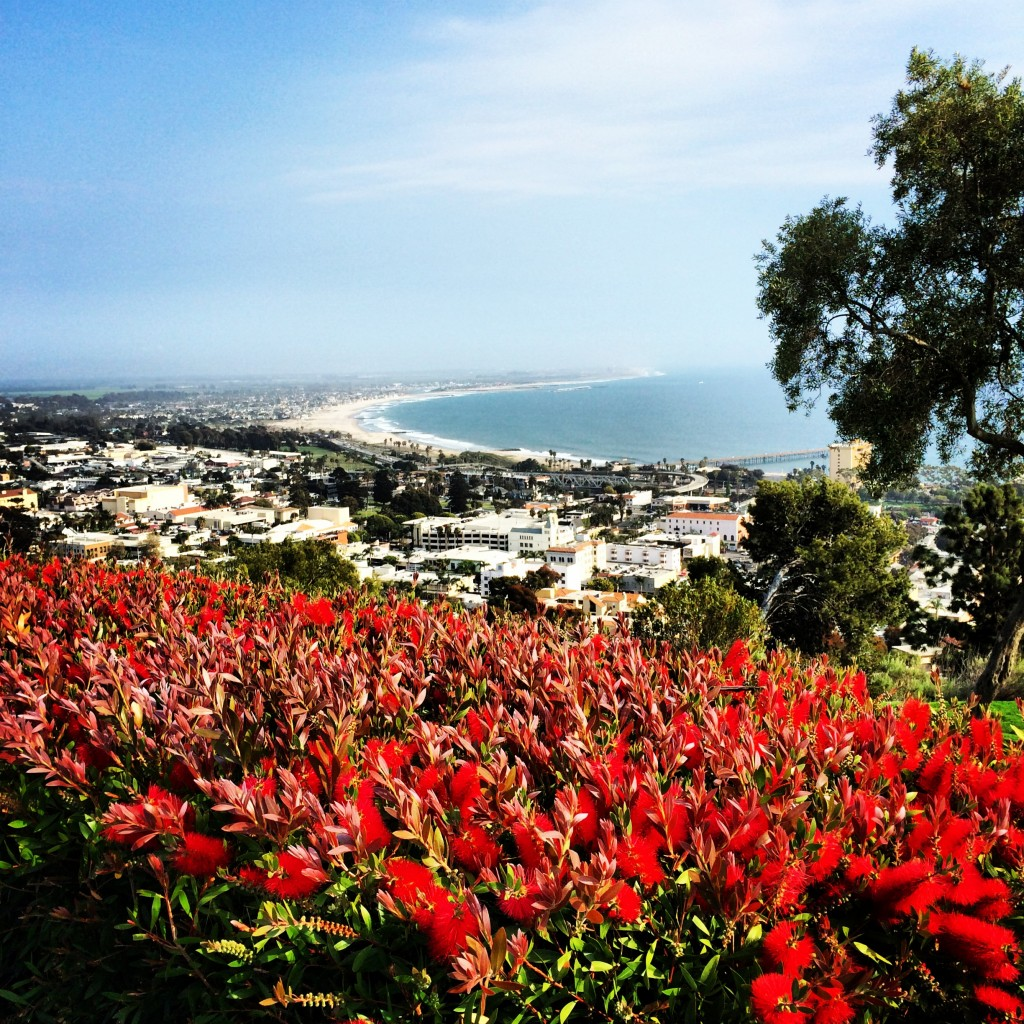 Ventura, California - Oceanside wildflowers