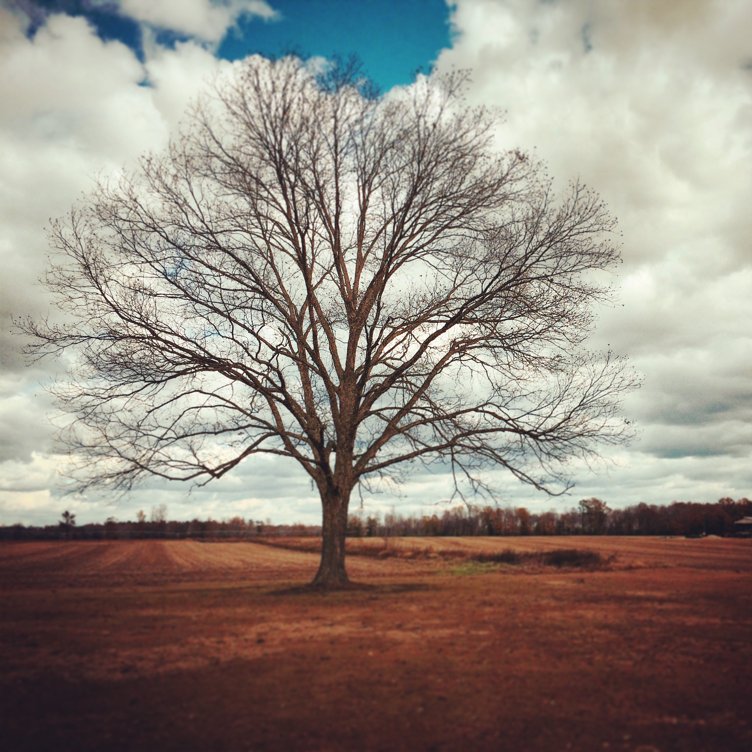 Stand alone tree