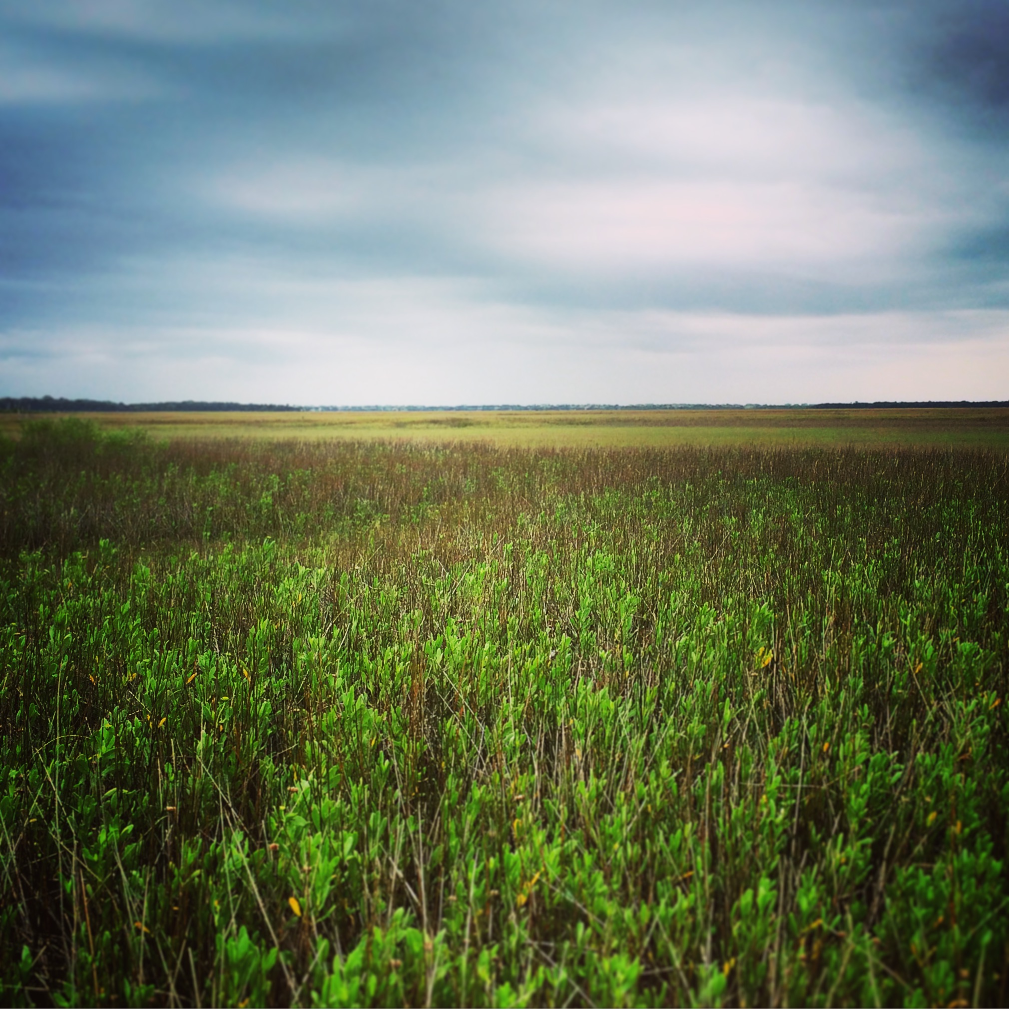Florida coastal marshlands
