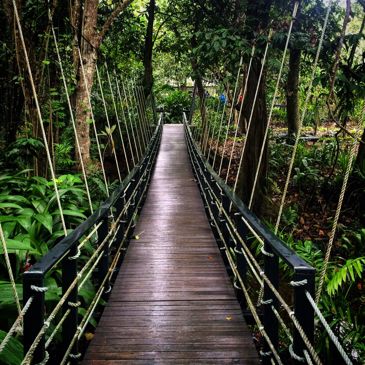 suspension bridge at Kula Eco Park, Fiji