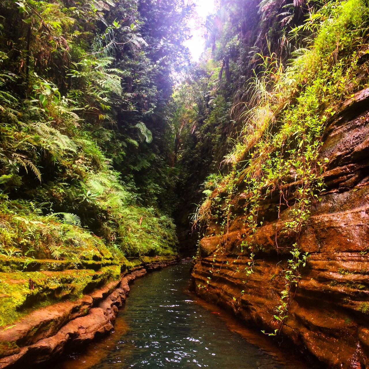The upper Navua River Nature Conservatory in Viti Levu, Fiji
