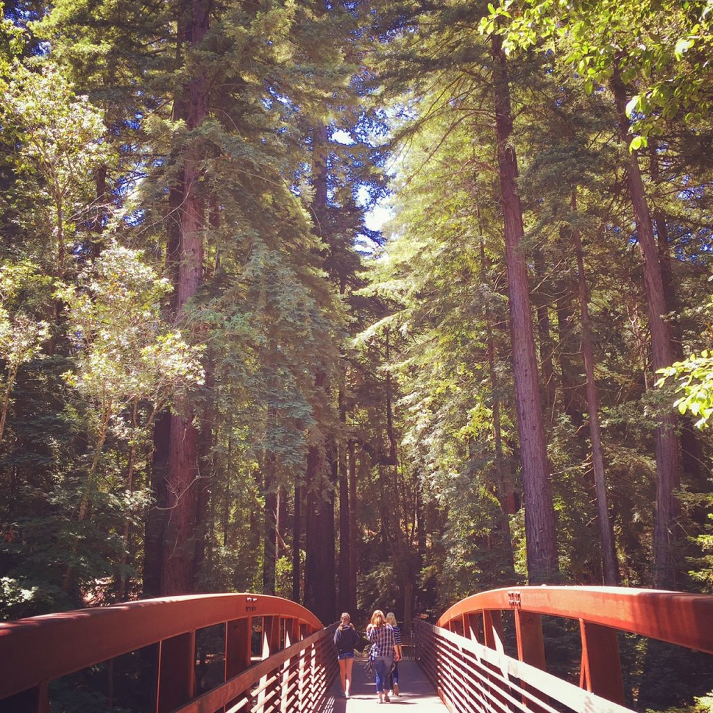 Pfeiffer Big Sur Redwoods