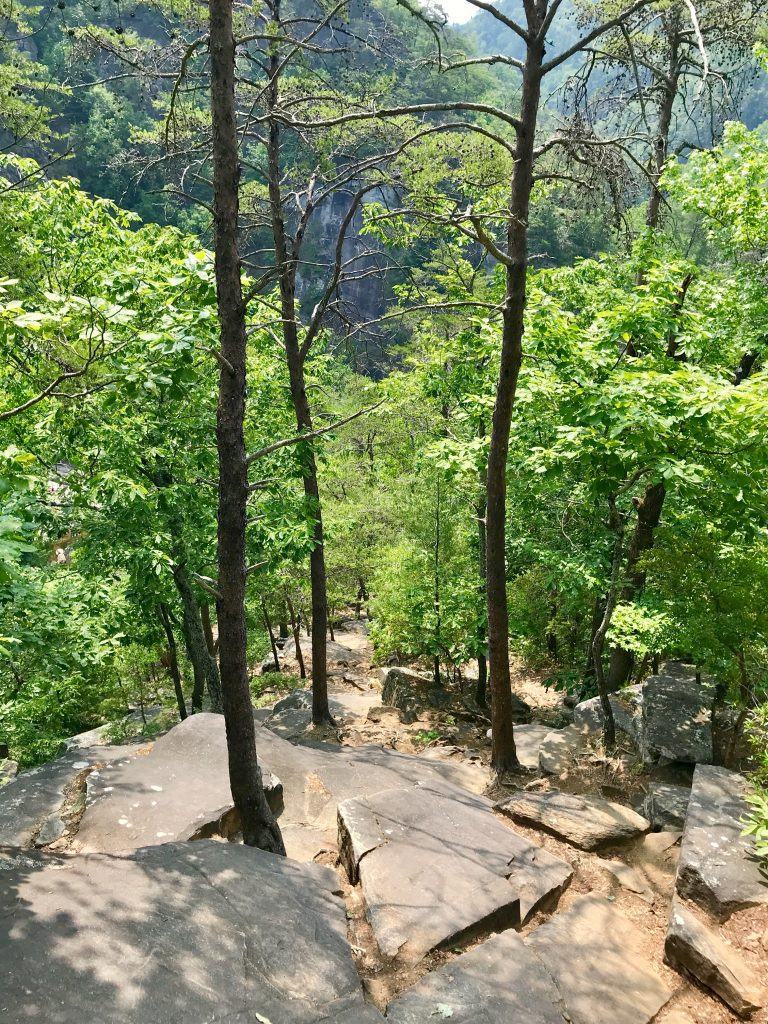 Top of trail looking down through forest in Tallulah Gorge