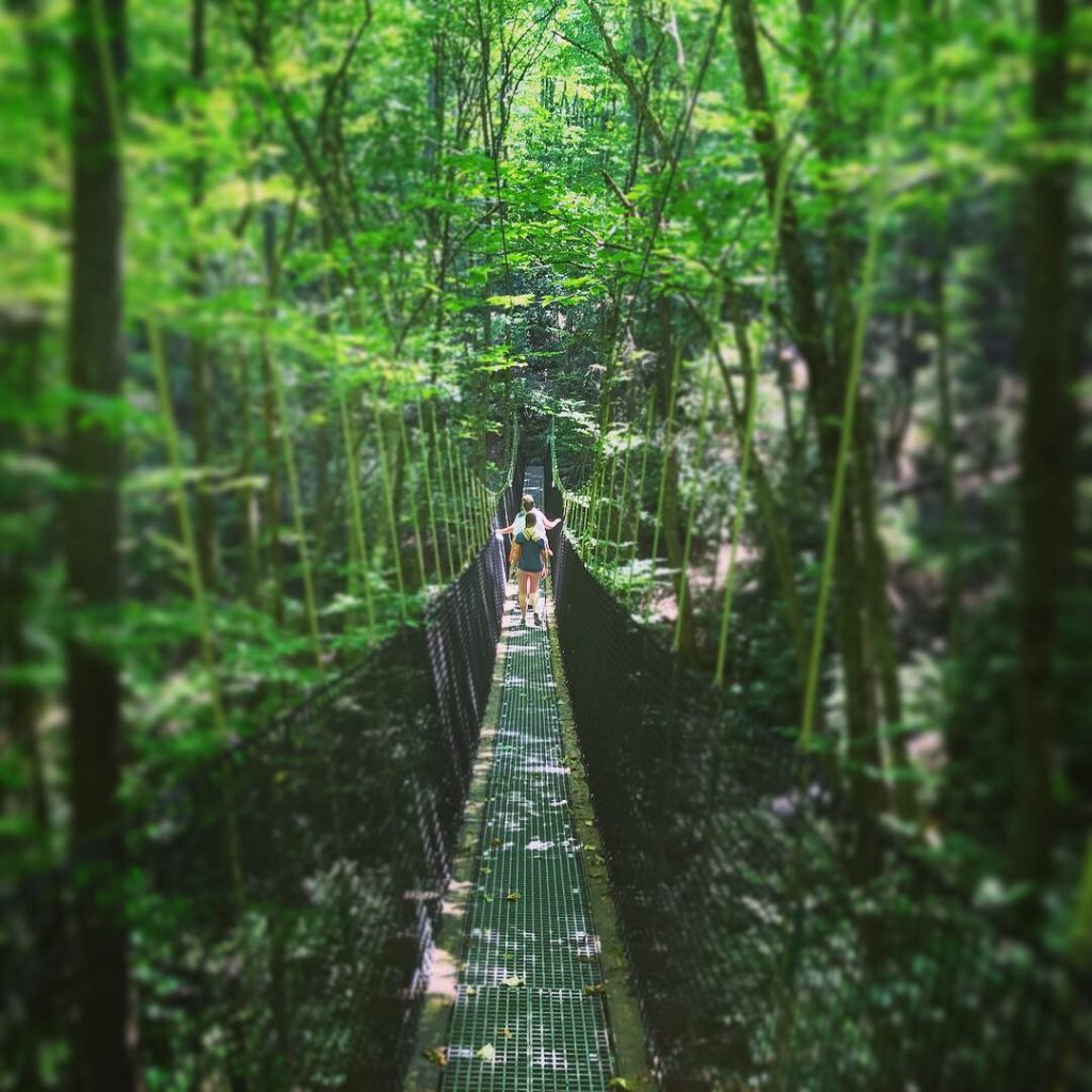 Suspension Bridge in Highlands Aerial Park