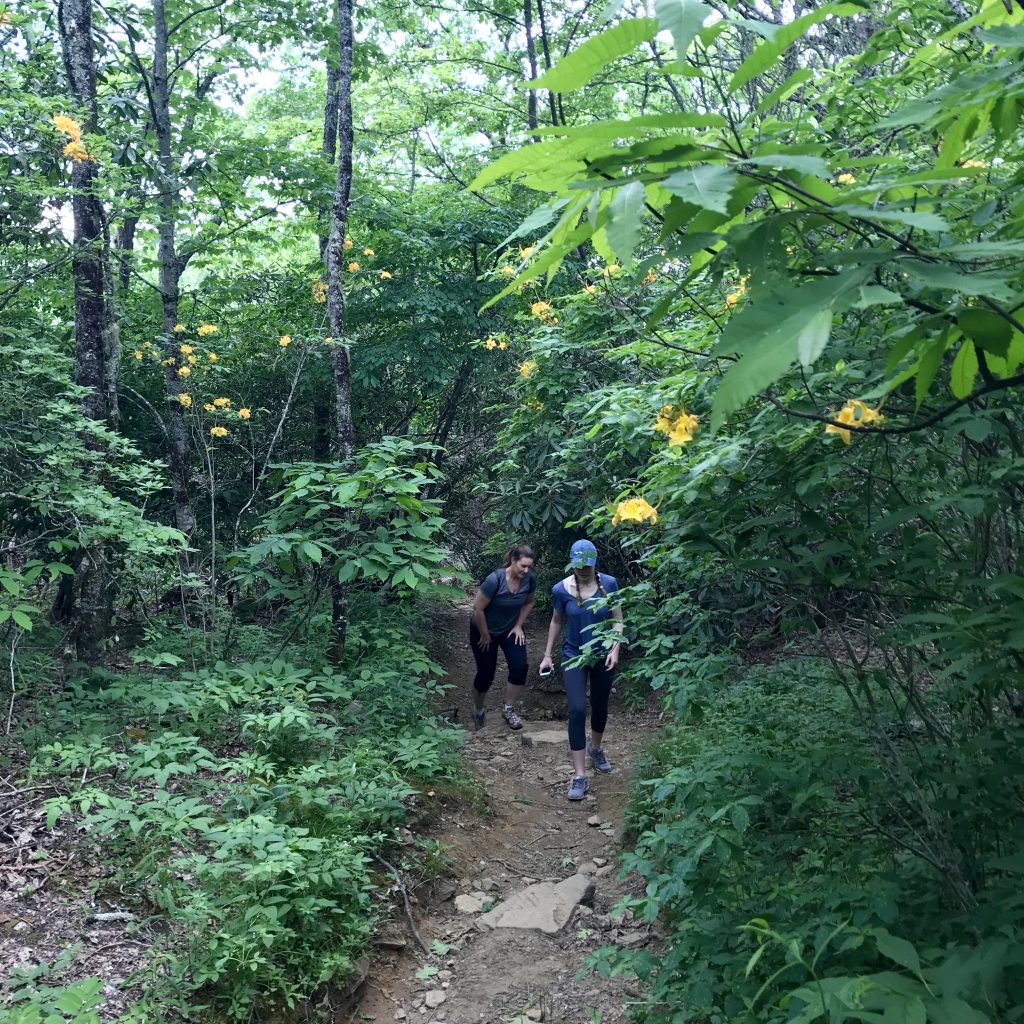 Two women hiking along the forest trail at Picken's Nose.